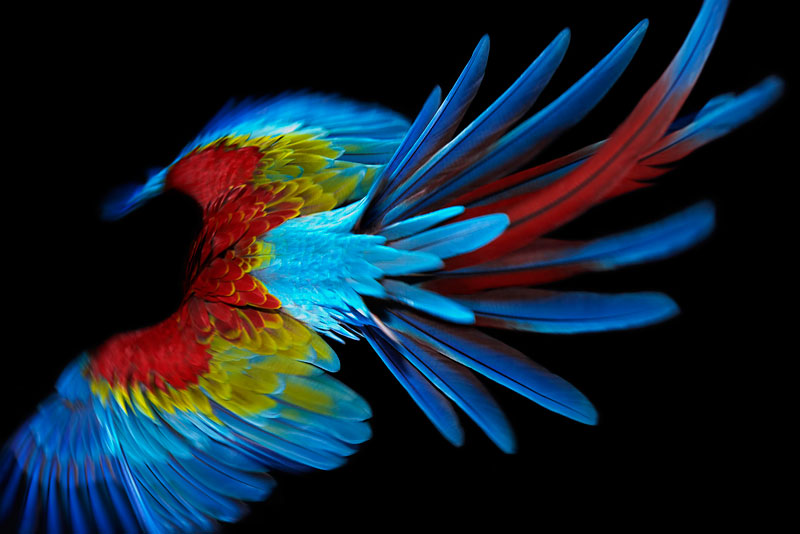 ss_bird_1.jpg