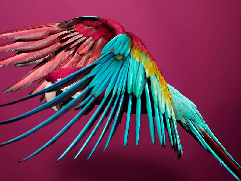 ss_bird_5.jpg