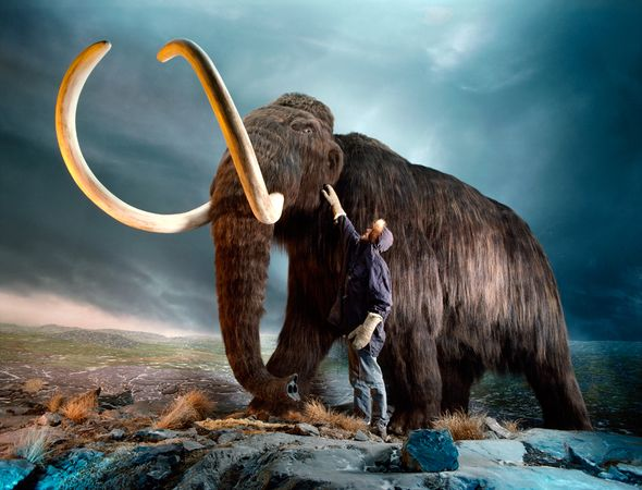 01-tedx-rebirth-wooly-mammoth_64849_600x450