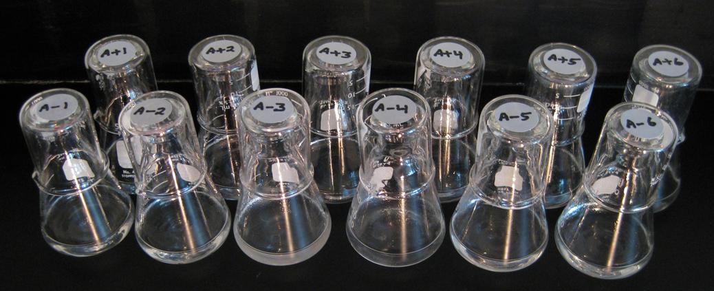 The 12 evolving E. coli populations